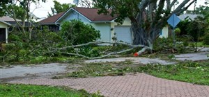 The Most Common Tree-Related Property Damage