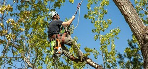 The Importance of Canopy Thinning for Healthy Trees