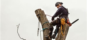 Five Signs It's Time to Cut Down Your Tree