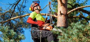 Keeping Your Trees Looking Great With Summer Tree Pruning