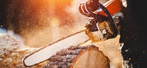Yes, We'll Help You Make Your Fallen Tree into Firewood