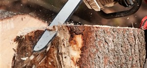 Should You Remove That Old Tree Stump?