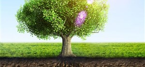 Caring for Your Tree's Roots
