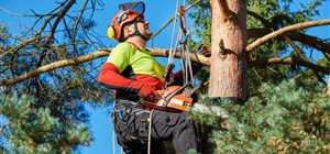 Tree Pruning: Should I Hire a Professional?