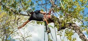 What is Canopy Pruning?