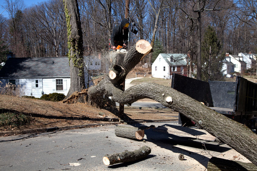 Why DIY Tree Removal is a Bad Idea