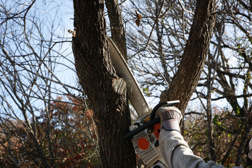 How Tree Trimming Can Help You Sell Your Home