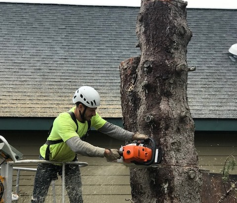 How to Choose a Tree Care Professional the Right Way