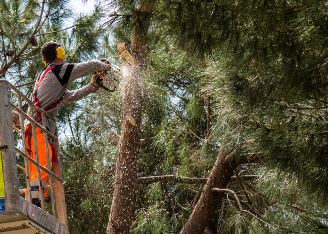 Risks of Hiring an Unlicensed Tree Trimmer