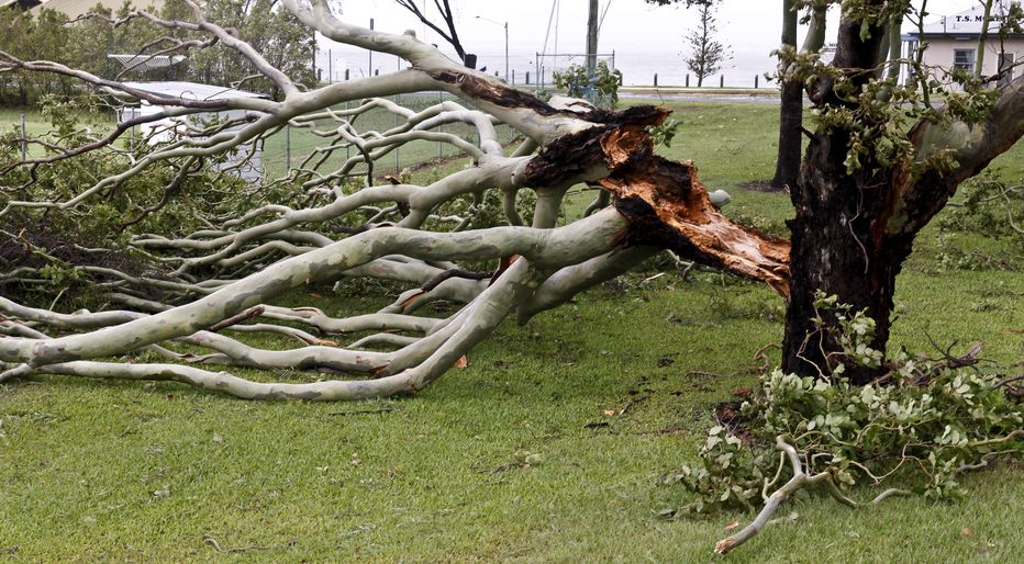 What To Do When A Summer Storm Damages Your Trees